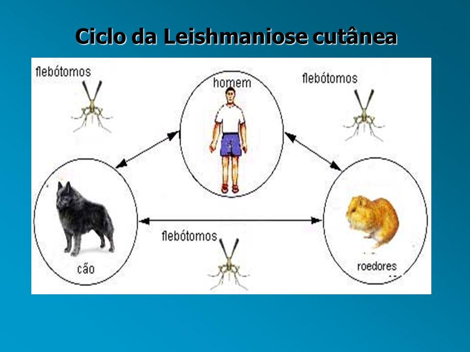 Ciclo da Leishmaniose cutânea