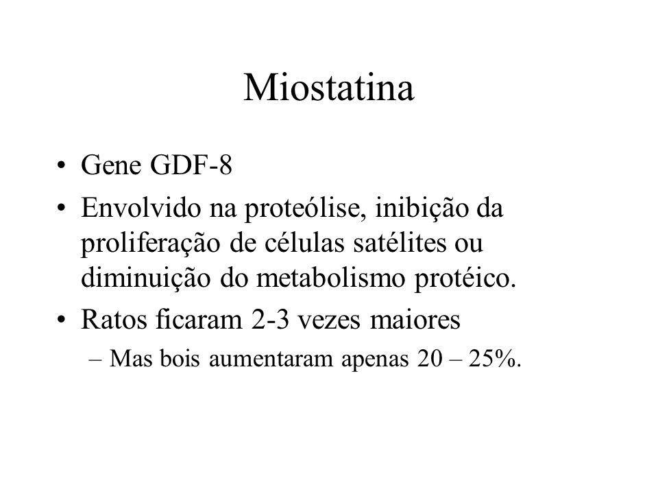 Miostatina Gene GDF-8. Envolvido na proteólise, inibição da proliferação de células satélites ou diminuição do metabolismo protéico.