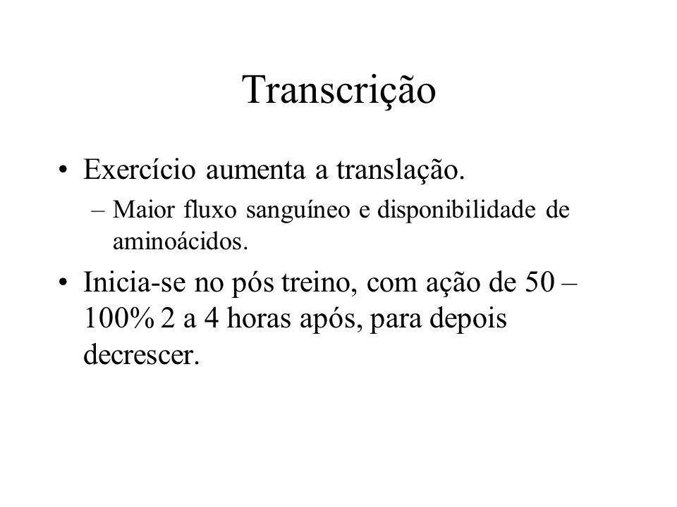 Transcrição Exercício aumenta a translação.