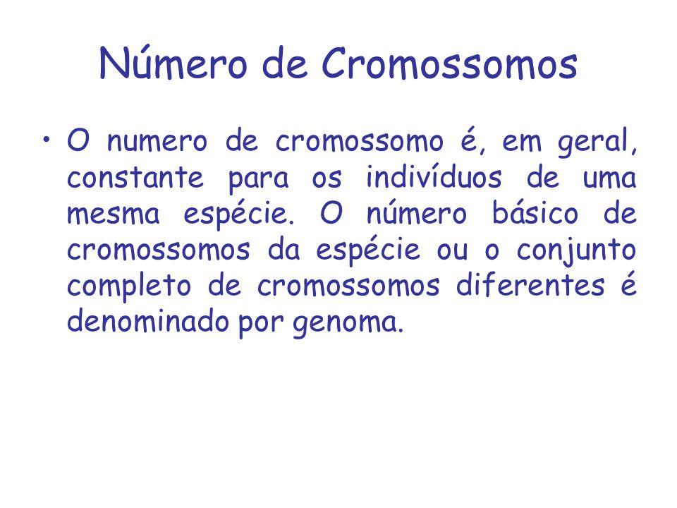 Número de Cromossomos