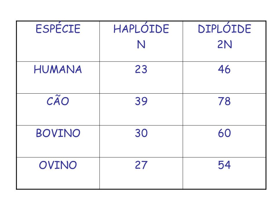 ESPÉCIE HAPLÓIDE N DIPLÓIDE 2N HUMANA 23 46 CÃO 39 78 BOVINO 30 60 OVINO 27 54