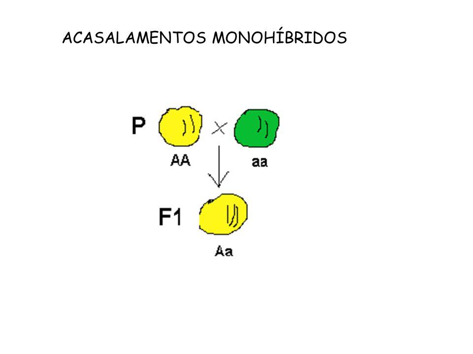 ACASALAMENTOS MONOHÍBRIDOS