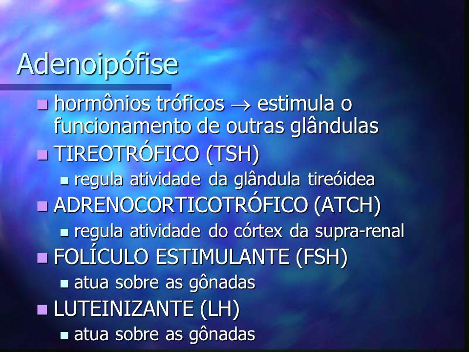 Adenoipófise hormônios tróficos  estimula o funcionamento de outras glândulas. TIREOTRÓFICO (TSH)