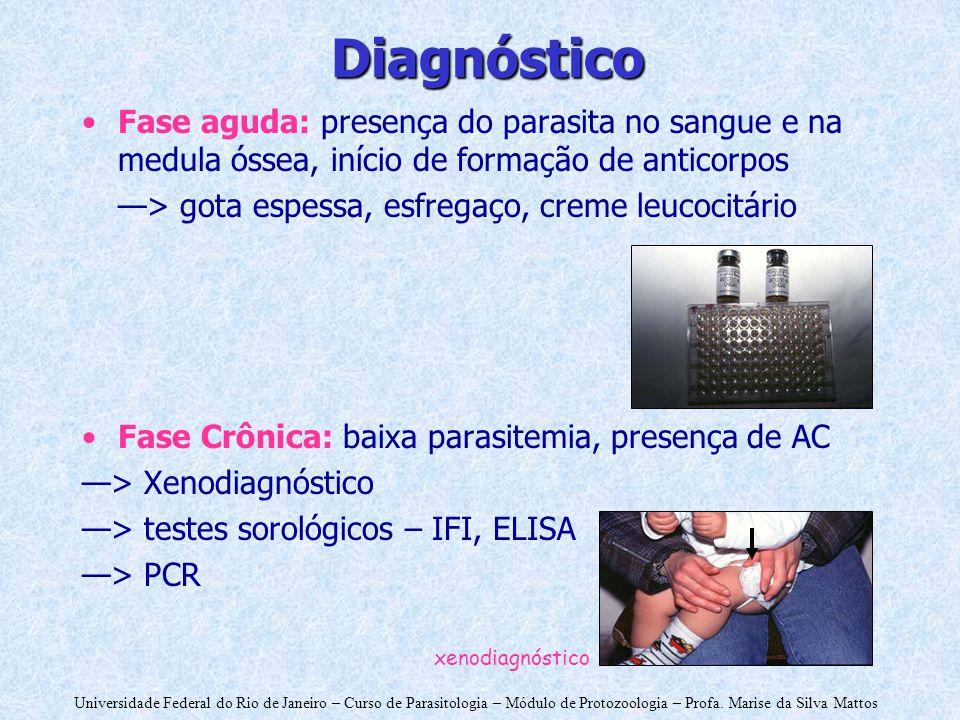Diagnóstico Fase aguda: presença do parasita no sangue e na medula óssea, início de formação de anticorpos.