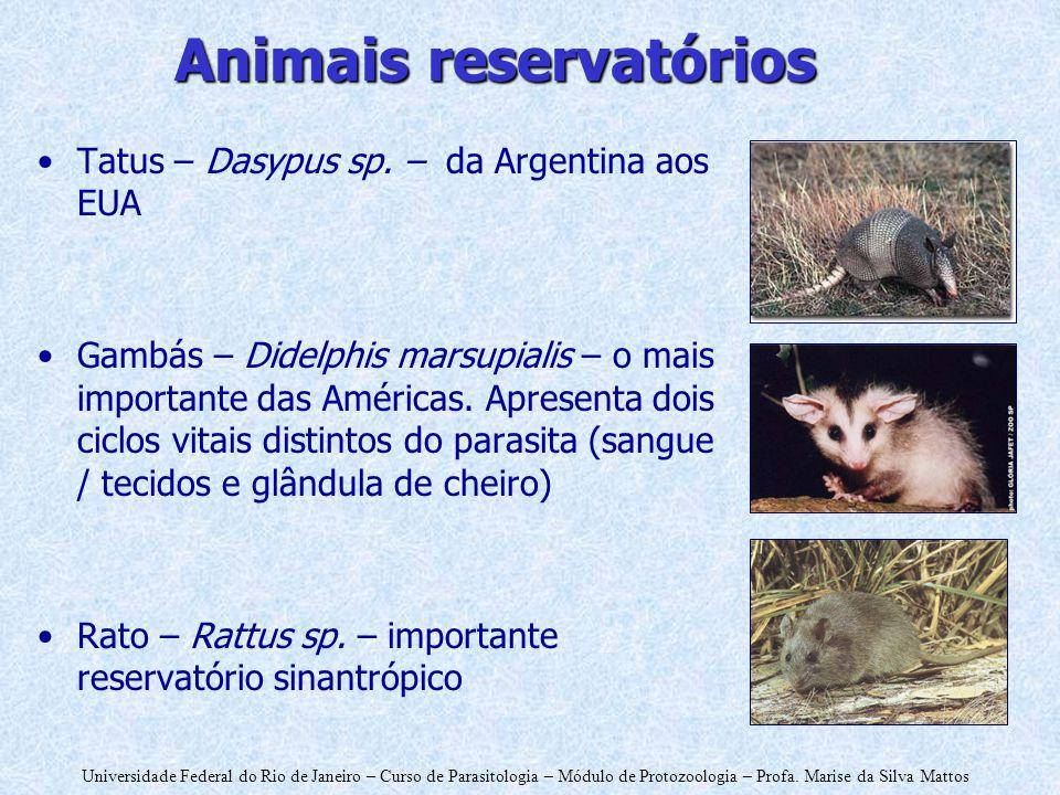 Animais reservatórios