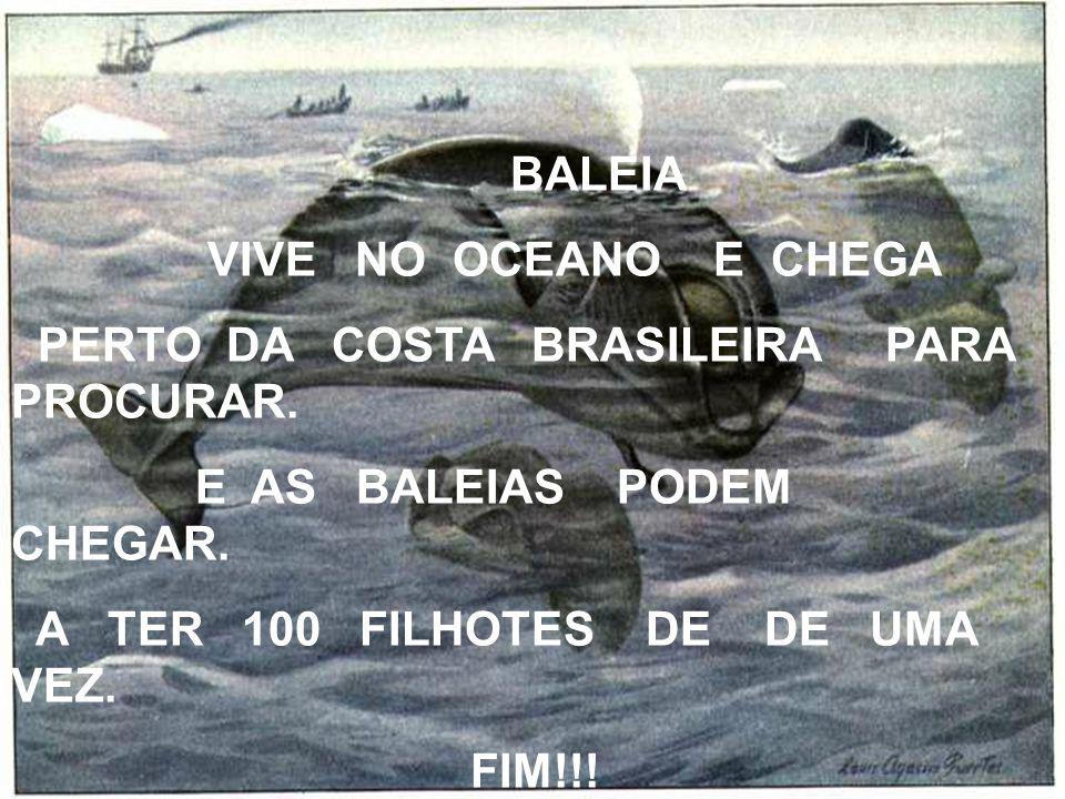 BALEIA VIVE NO OCEANO E CHEGA. PERTO DA COSTA BRASILEIRA PARA PROCURAR. E AS BALEIAS PODEM CHEGAR.