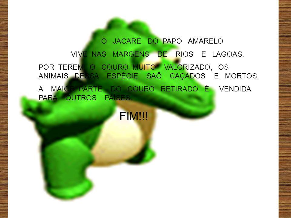 O JACARÉ DO PAPO AMARELO