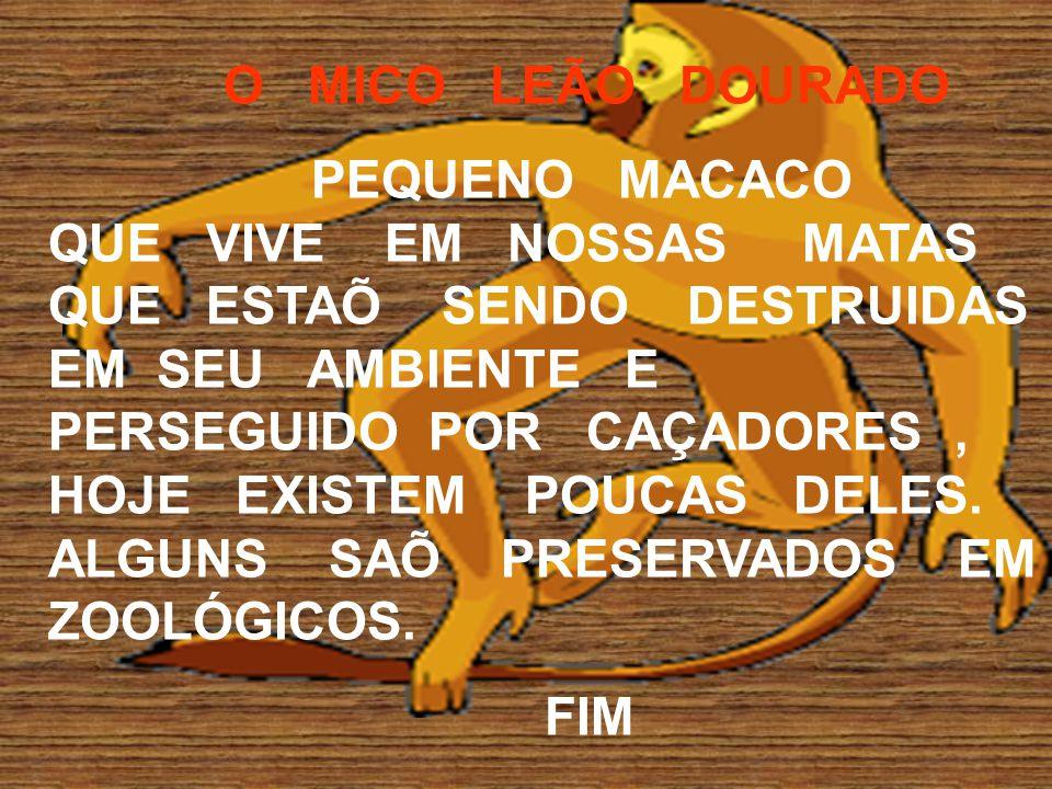 O MICO LEÃO DOURADO