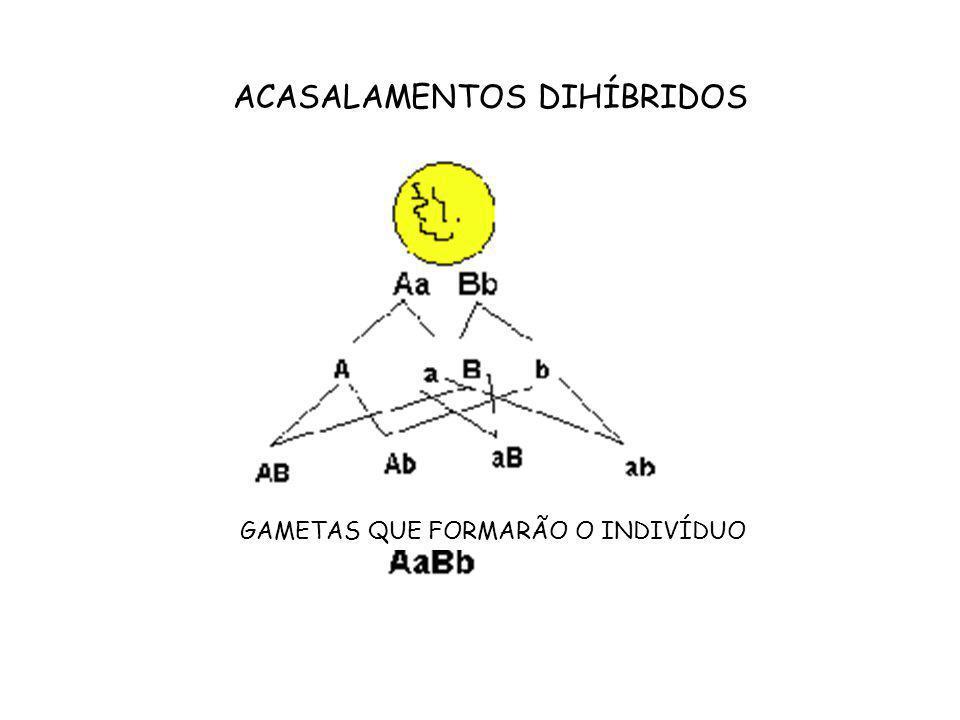 ACASALAMENTOS DIHÍBRIDOS