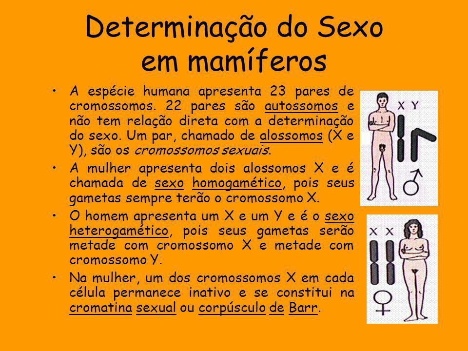 Determinação do Sexo em mamíferos