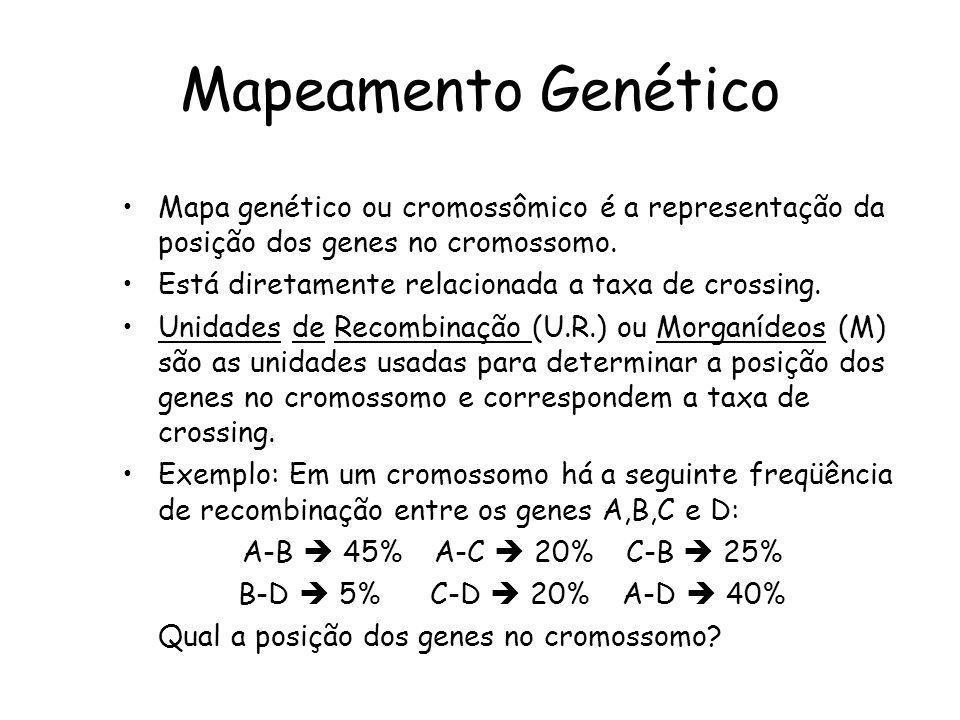 Mapeamento Genético Mapa genético ou cromossômico é a representação da posição dos genes no cromossomo.
