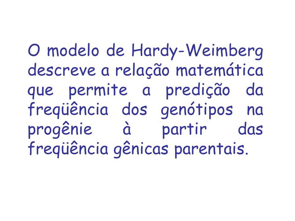 O modelo de Hardy-Weimberg descreve a relação matemática que permite a predição da freqüência dos genótipos na progênie à partir das freqüência gênicas parentais.