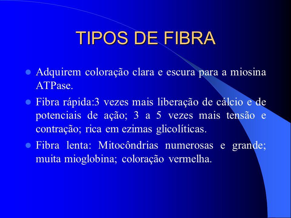 TIPOS DE FIBRA Adquirem coloração clara e escura para a miosina ATPase.