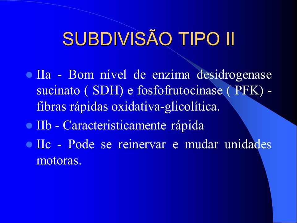 SUBDIVISÃO TIPO II IIa - Bom nível de enzima desidrogenase sucinato ( SDH) e fosfofrutocinase ( PFK) - fibras rápidas oxidativa-glicolítica.