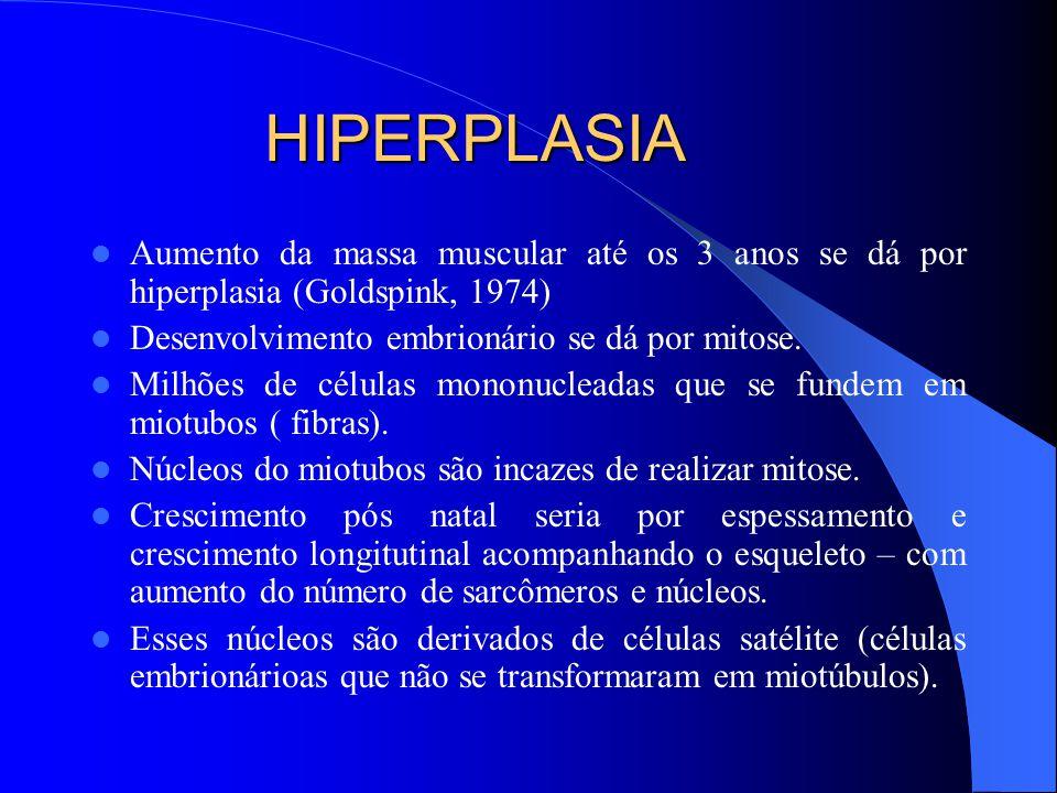 HIPERPLASIA Aumento da massa muscular até os 3 anos se dá por hiperplasia (Goldspink, 1974) Desenvolvimento embrionário se dá por mitose.
