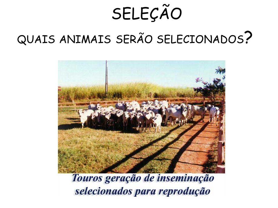 SELEÇÃO QUAIS ANIMAIS SERÃO SELECIONADOS