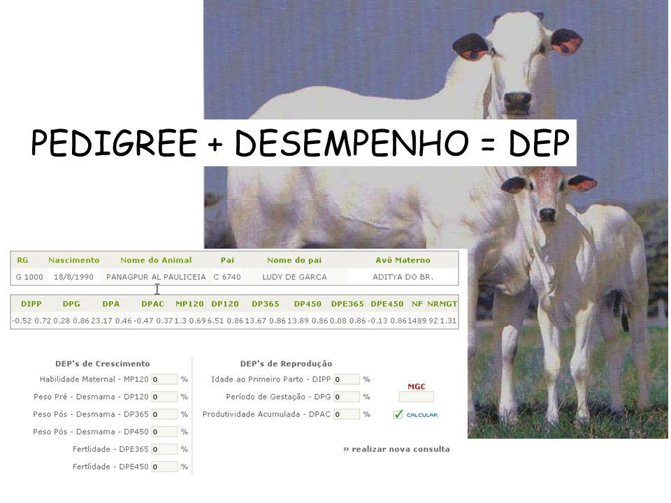 PEDIGREE + DESEMPENHO = DEP