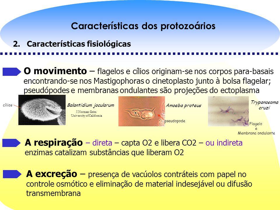 Características dos protozoários Características fisiológicas