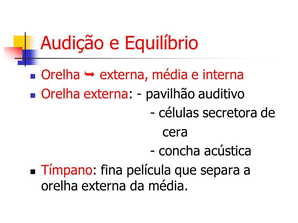 Audição e Equilíbrio Orelha  externa, média e interna