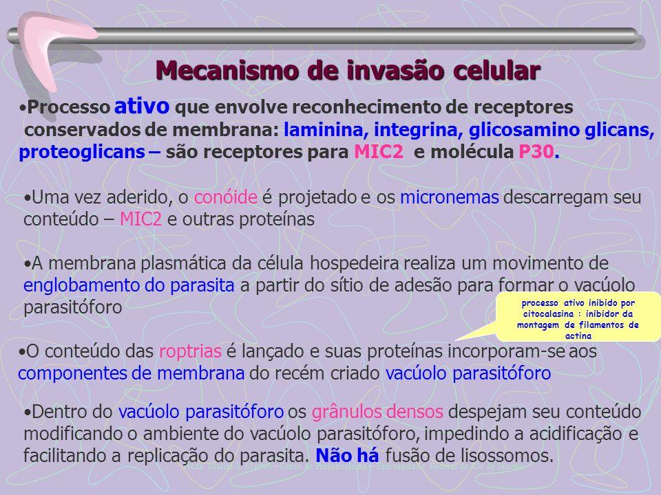 Mecanismo de invasão celular