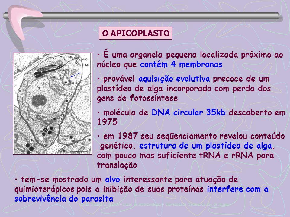 O APICOPLASTO É uma organela pequena localizada próximo ao núcleo que contém 4 membranas.