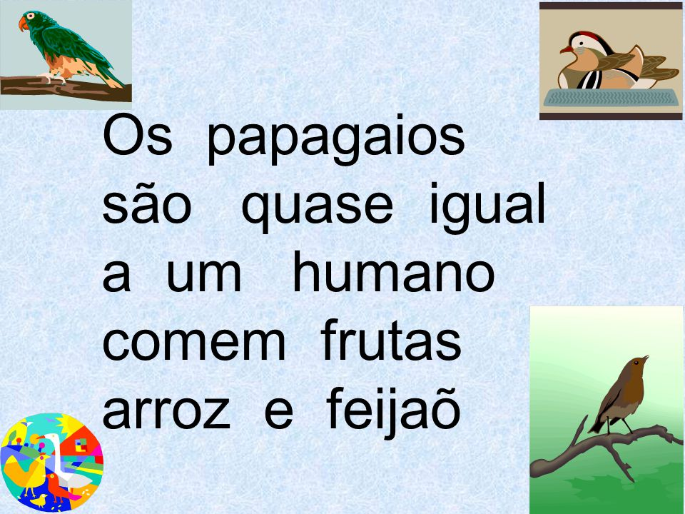 Os papagaios são quase igual a um humano comem frutas arroz e feijaõ