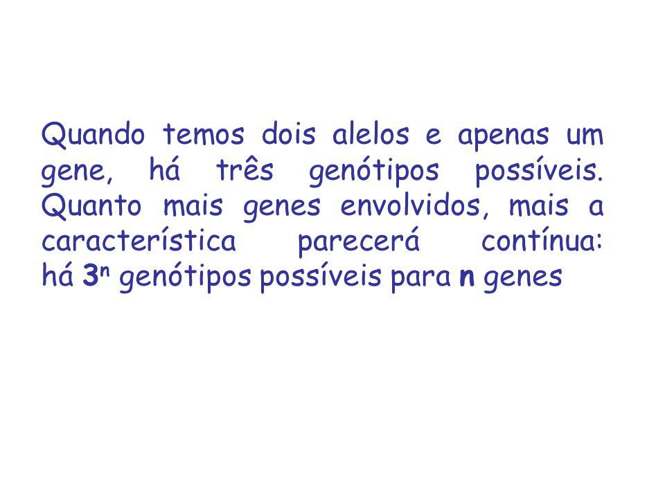 Quando temos dois alelos e apenas um gene, há três genótipos possíveis