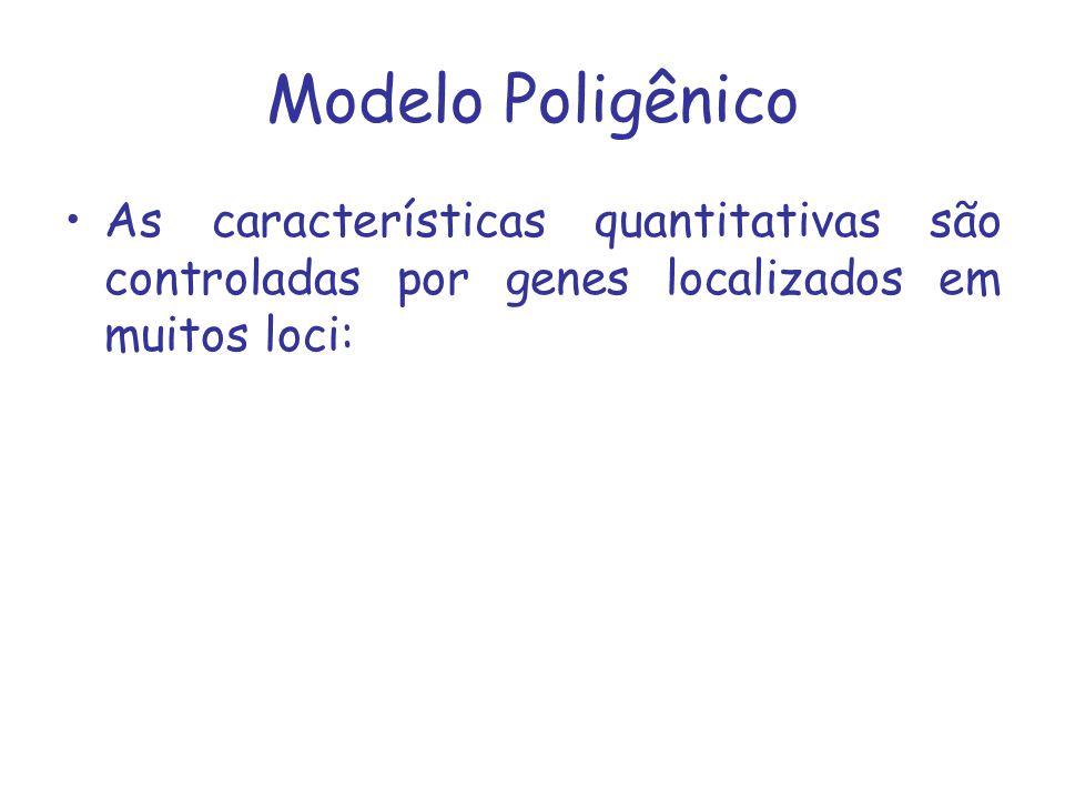 Modelo Poligênico As características quantitativas são controladas por genes localizados em muitos loci: