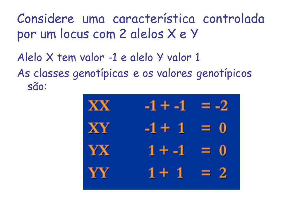 Considere uma característica controlada por um locus com 2 alelos X e Y
