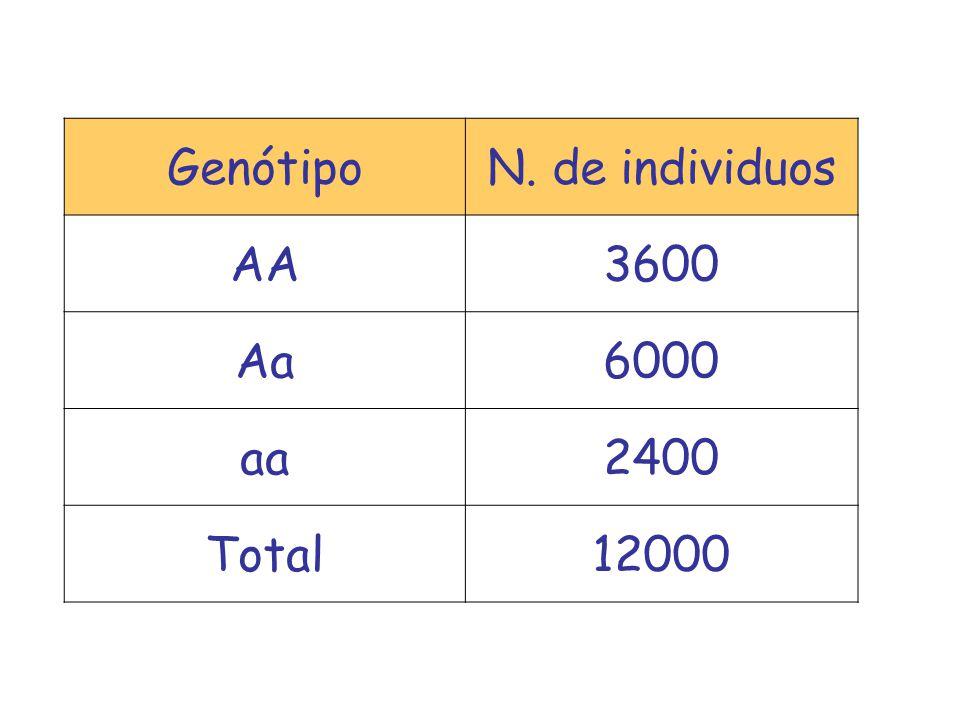 Genótipo N. de individuos AA 3600 Aa 6000 aa 2400 Total 12000