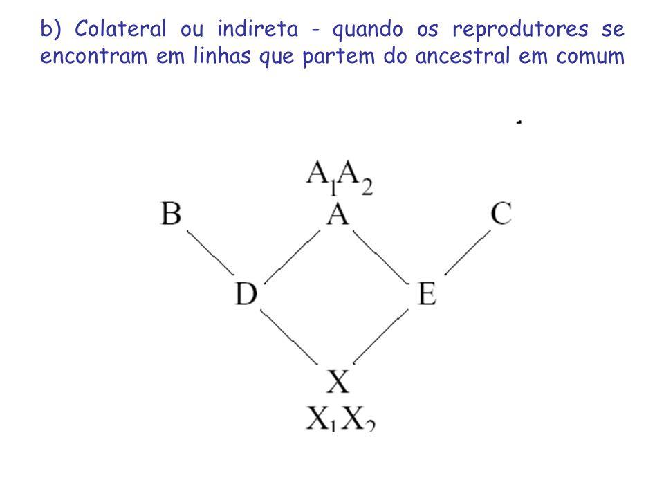 b) Colateral ou indireta - quando os reprodutores se encontram em linhas que partem do ancestral em comum