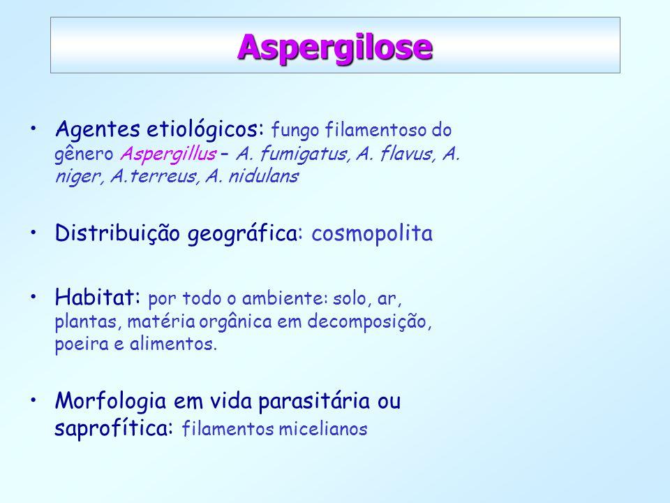 Aspergilose Agentes etiológicos: fungo filamentoso do gênero Aspergillus – A. fumigatus, A. flavus, A. niger, A.terreus, A. nidulans.