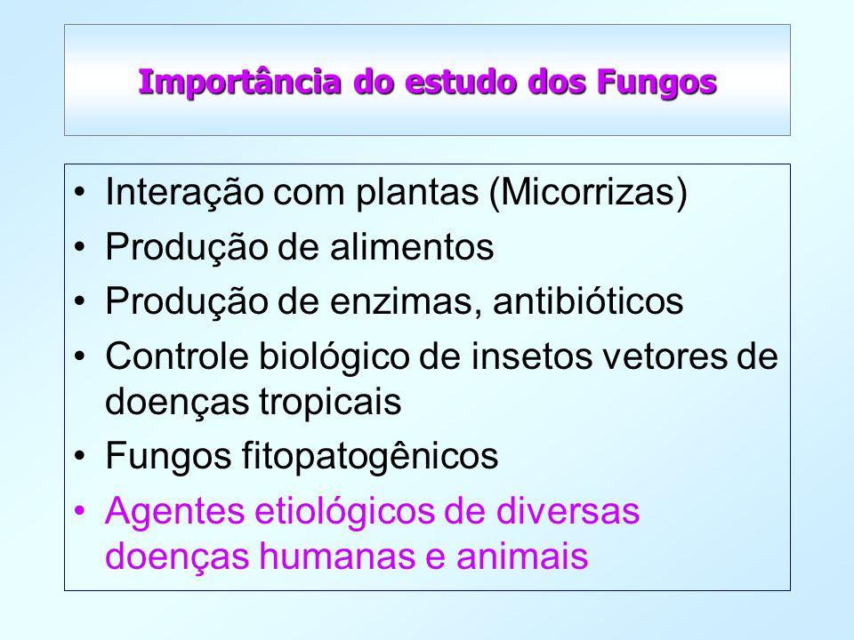 Importância do estudo dos Fungos