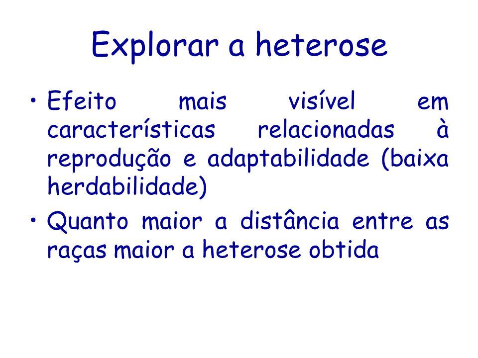 Explorar a heterose Efeito mais visível em características relacionadas à reprodução e adaptabilidade (baixa herdabilidade)