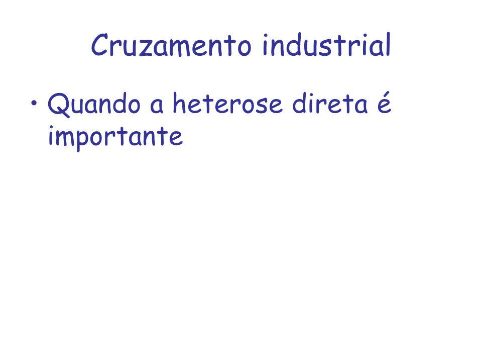 Cruzamento industrial