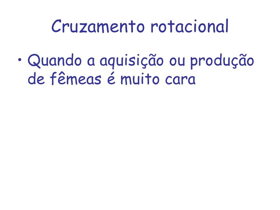 Cruzamento rotacional