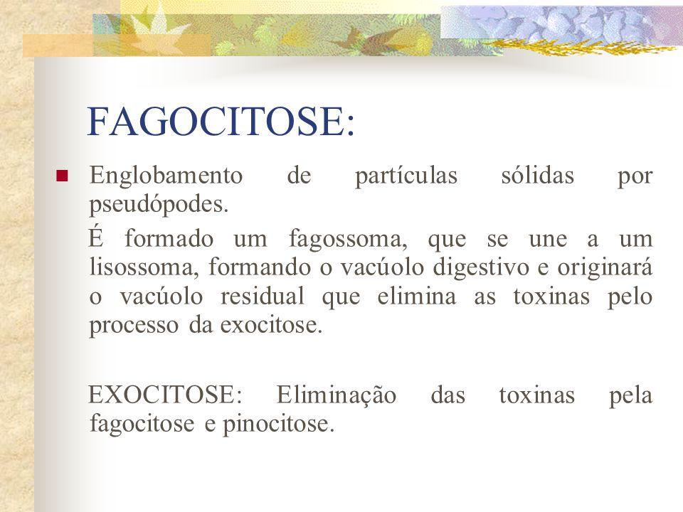 FAGOCITOSE: Englobamento de partículas sólidas por pseudópodes.