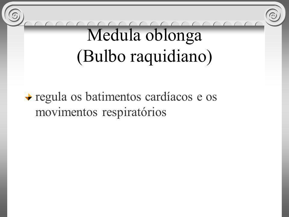 Medula oblonga (Bulbo raquidiano)