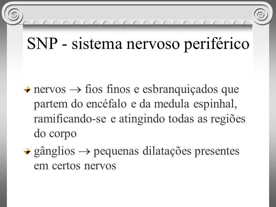 SNP - sistema nervoso periférico