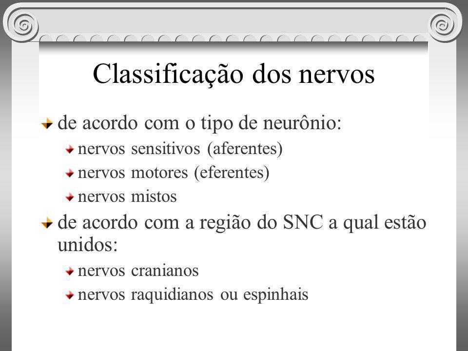 Classificação dos nervos