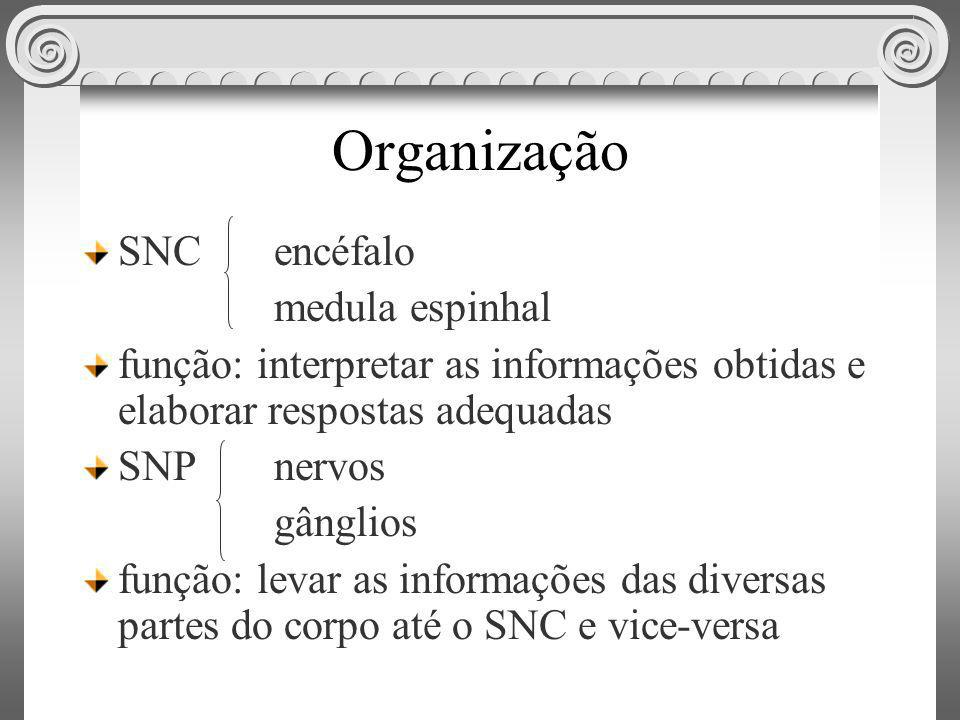 Organização SNC encéfalo medula espinhal