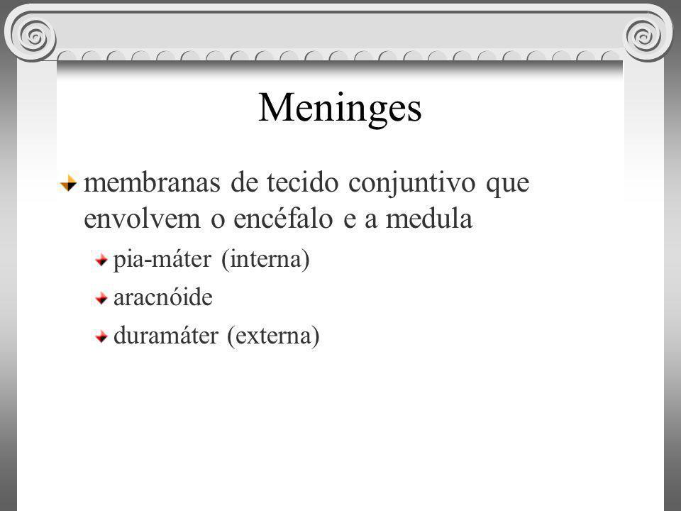 Meninges membranas de tecido conjuntivo que envolvem o encéfalo e a medula. pia-máter (interna) aracnóide.