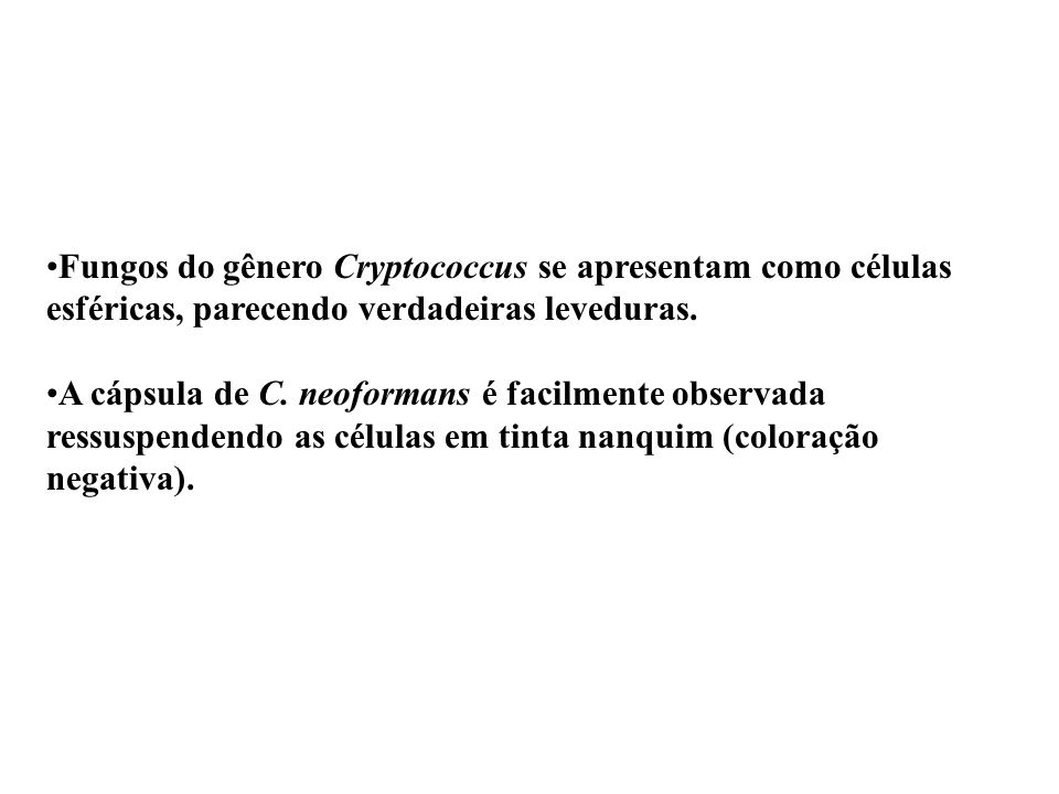 Fungos do gênero Cryptococcus se apresentam como células esféricas, parecendo verdadeiras leveduras.