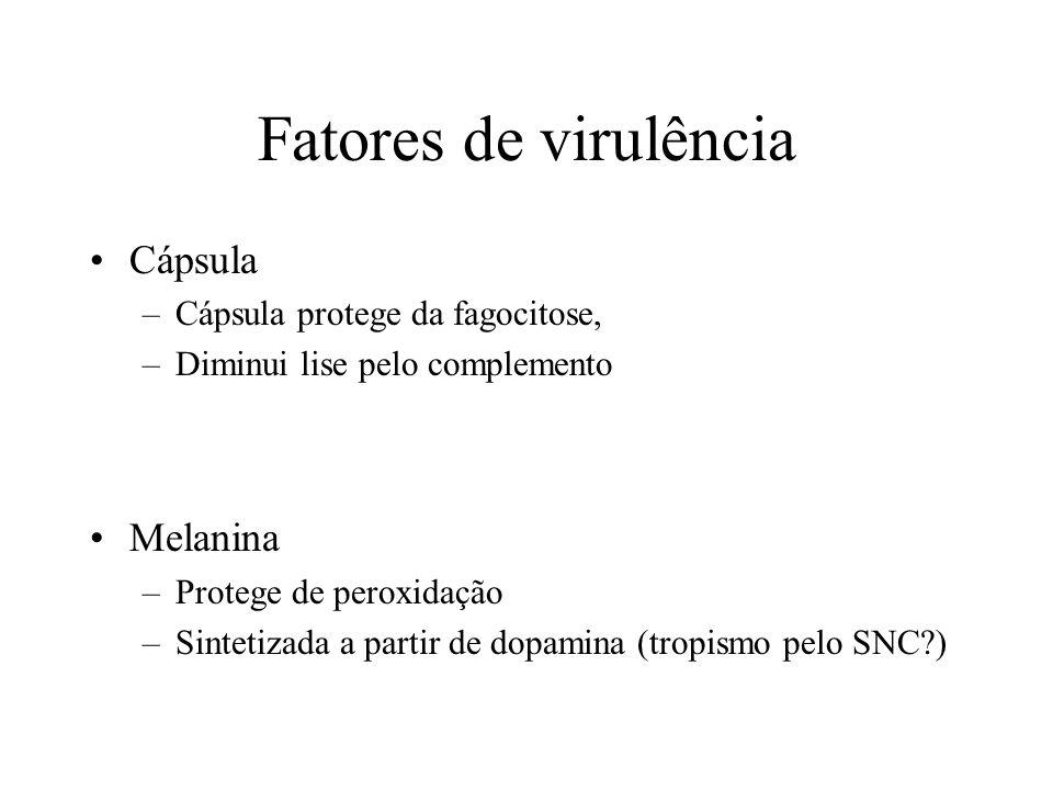 Fatores de virulência Cápsula Melanina Cápsula protege da fagocitose,