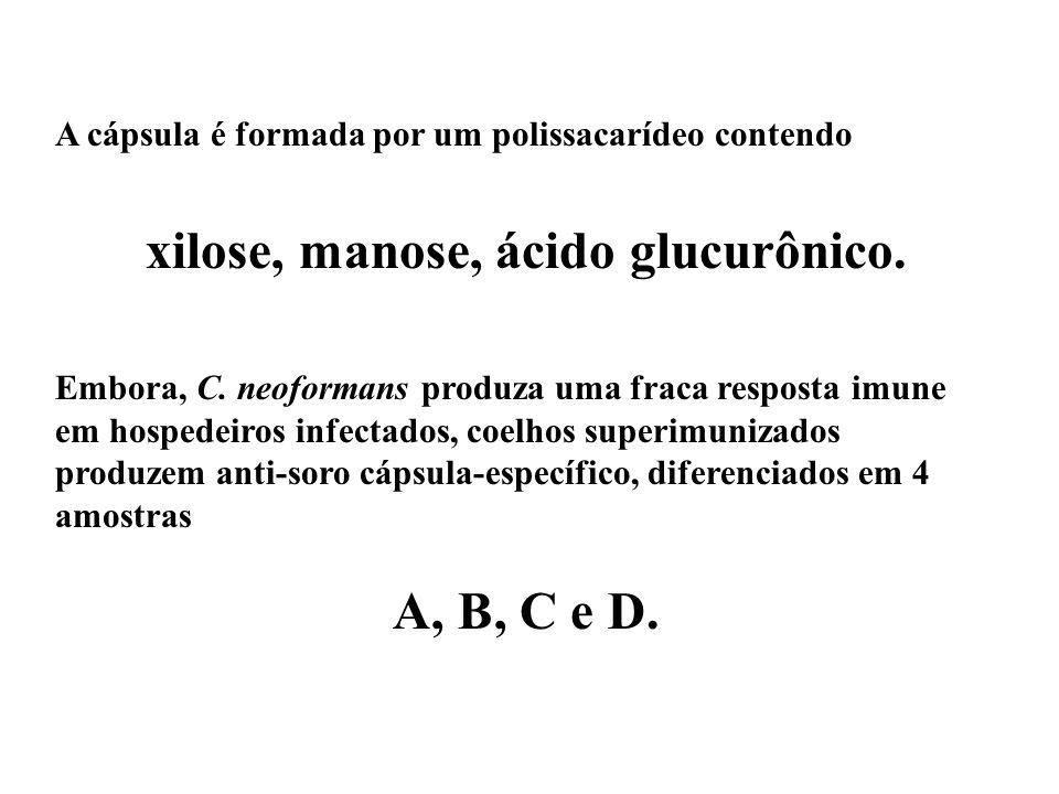 xilose, manose, ácido glucurônico.