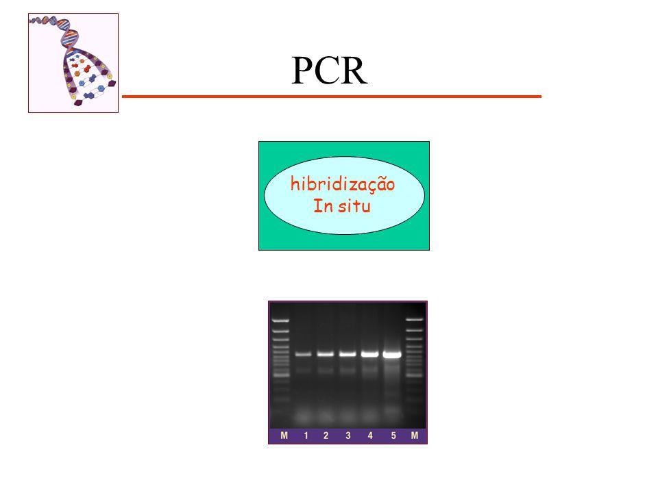 PCR hibridização In situ