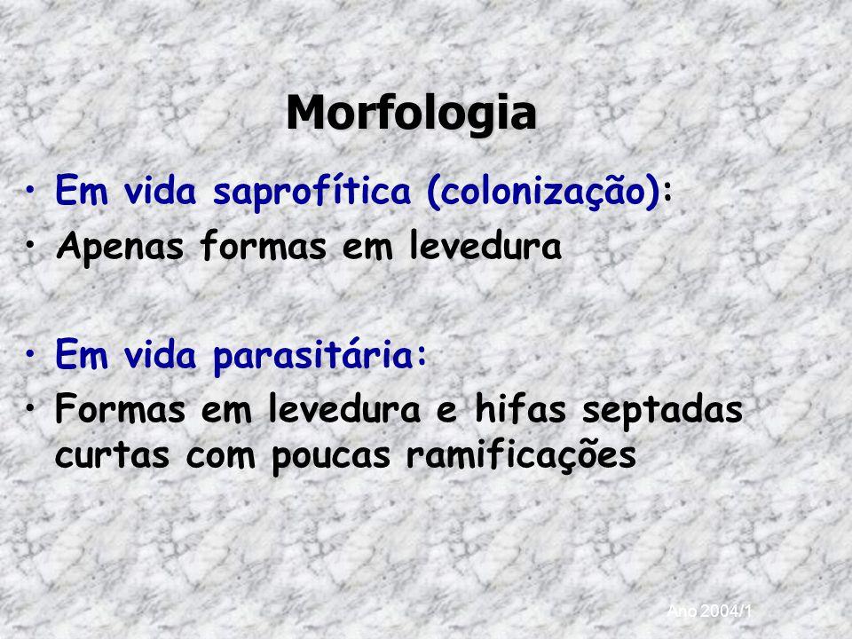 Morfologia Em vida saprofítica (colonização):