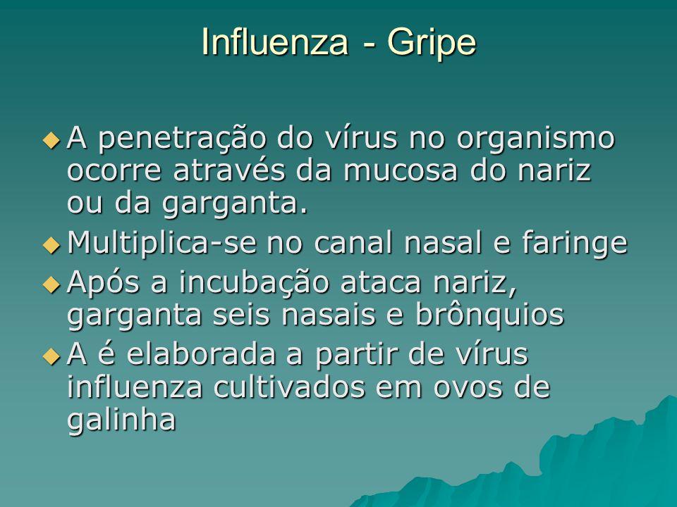 Influenza - Gripe A penetração do vírus no organismo ocorre através da mucosa do nariz ou da garganta.