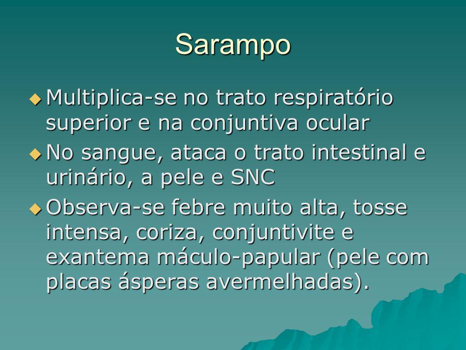 Sarampo Multiplica-se no trato respiratório superior e na conjuntiva ocular. No sangue, ataca o trato intestinal e urinário, a pele e SNC.