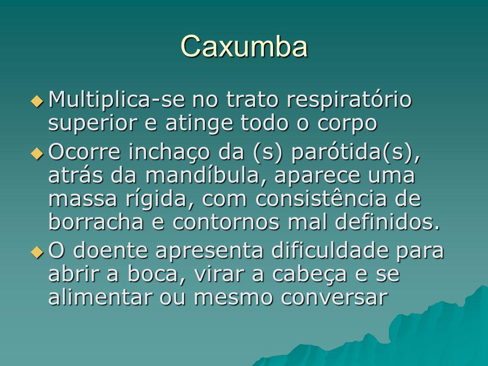 Caxumba Multiplica-se no trato respiratório superior e atinge todo o corpo.